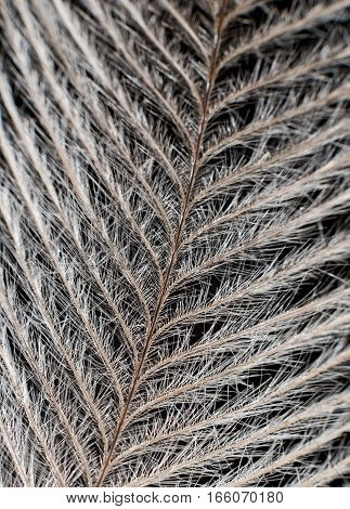 Elegant Feather On Black Extreme Close Up Detail.