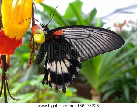 Butterfly eating the nektar on a flower
