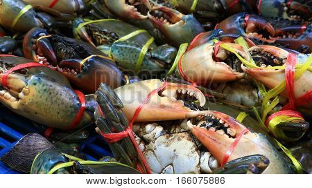 Serrated Mud Crab, Mangrove Crab, Black Crab, Giant Mud Crab A Sea Crab On Basket. Fresh Crab Prepar