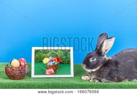 On a blue background rabbit lies beside pictures of flowers and Easter eggs