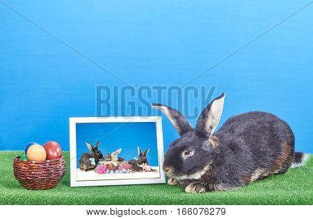 Rabbit is near the frame with a photo and Easter eggs
