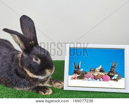 Near the pictures with bunnies is rabbit