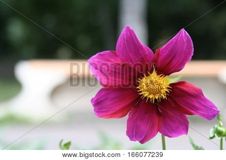 Flower Closeup Background