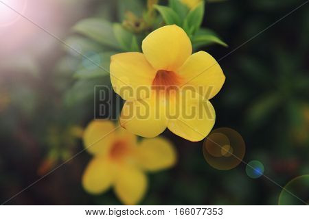 Yellow Flowers Close-up Background
