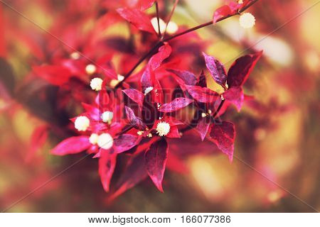 Red And Violet Flowers