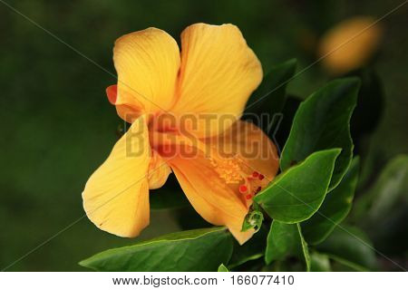 Yellow Flower Close-up Background