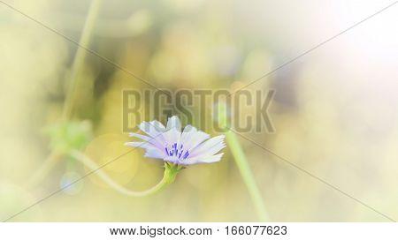Lite Wildflower Background