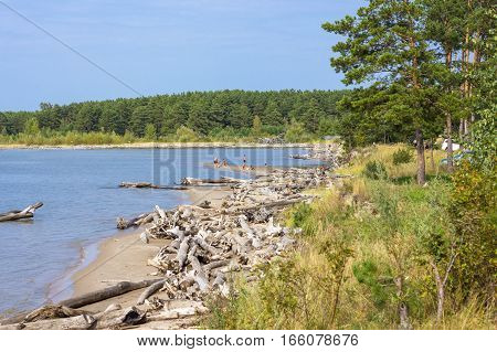 The river Ob ( the Ob reservoir ) Berdsk Novosibirsk oblast Siberia Russia - September 1 2015: holidaymakers swimming in the river on a wild beach