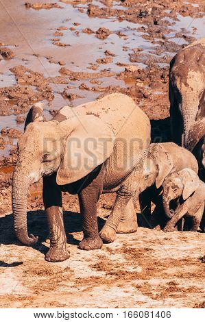 Addo Elephant National Park,eastern Cape,south Africa