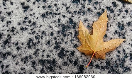 A single autumn golden leaf with water drops on the first snow background. Seasonal weather autumn and winter concept