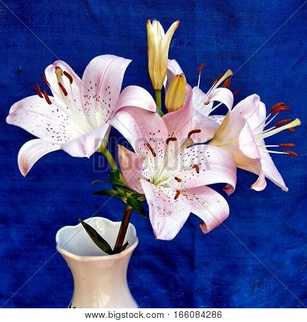 Bouquet of pink lilies on a blue background in Or Yehuda Israel July 24 2010