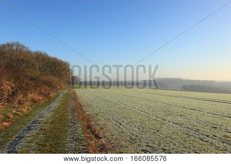 English landscape in winter with trees and hedgerows by a farm track through frosted wheat fields on the scenic Yorkshire wolds.