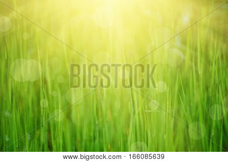 Natural abstract soft green eco sunny background with grass and light spots
