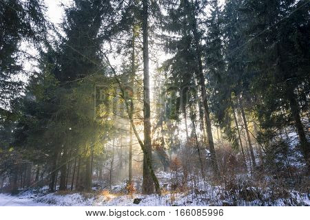 Evening Sun in Winter. Sun behind a Tree