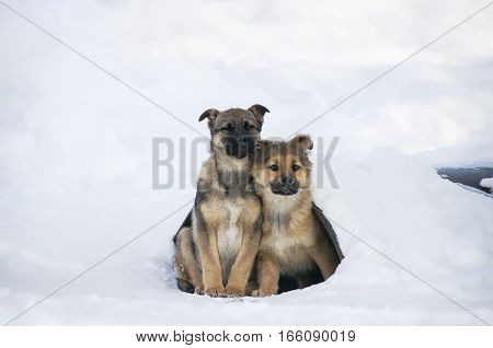 homeless young dog clung to each other to keep warm. Problems stray animals survive the winter.