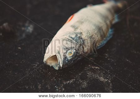 Bloated dead poisoned fish lies on the bank of the river. Environmental pollution. The impact of toxic emissions in the aquatic environment.