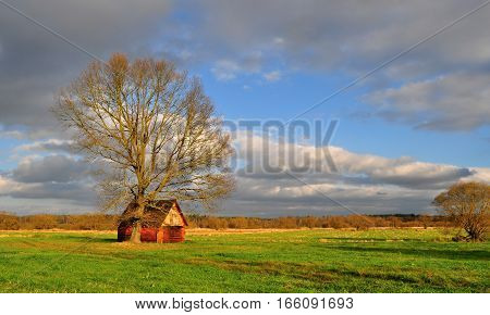 Rural house with the tree on field. South Bohemia, Czech Republic