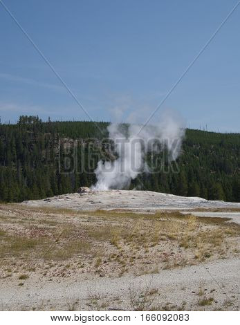 Old Faithful in Yellowstone National Park begins its cycle of frequent eruptions on a sunny summer day.