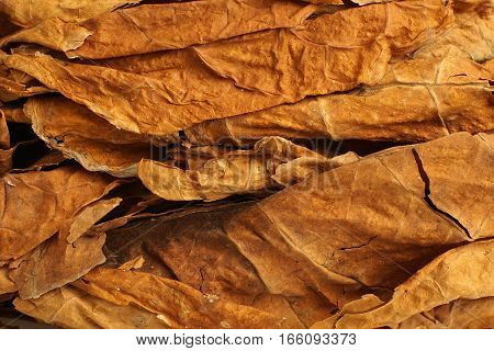 Dried Tobacco Leaves As Background