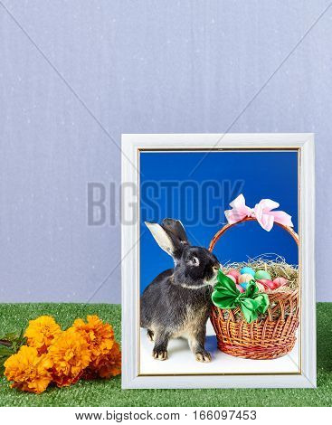 Frame with photo rabbit photography and basket with easter eggs decorated with bows
