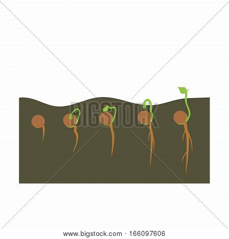 growing plant in process, concept of planting process in flat design, how to grow tree from the seed in the garden easy step by step