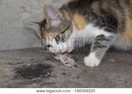 The Cat Caught The Mouse. The Cat Eats The Caught Mouse. Home Hunter