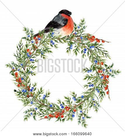 Watercolor juniper wreath with red berries and bullfinch. Hand painted evergreen branch with berries and bird on white background. Botanical illustration for design or print