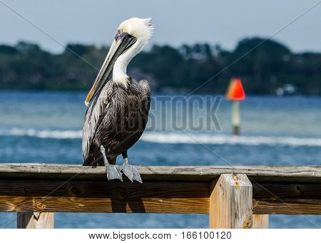 A BROWN PELICAN PERCHED ON A DOCK WITH A BOAT WAKE AND A CHANNEL MARKER BLURRED IN THE BACKGROUND