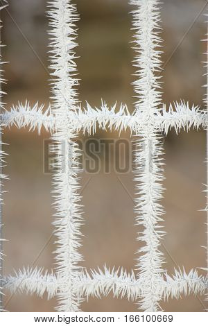 Hoarfrost on a gate in a winter forest