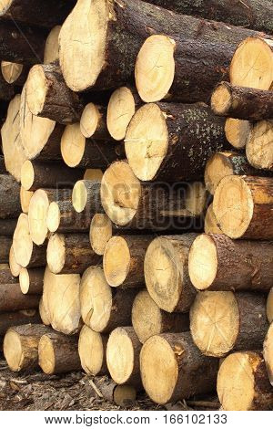 Many stacked in pile of pine logs, vertical photo, side view close-up