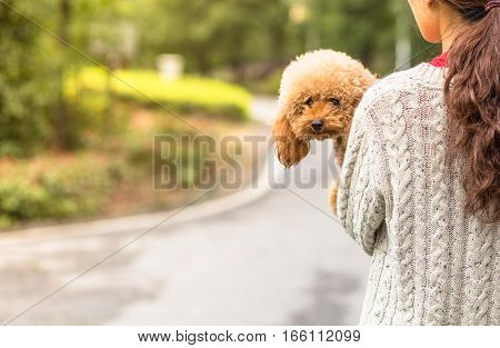 Toy Poodle playing with its master in park
