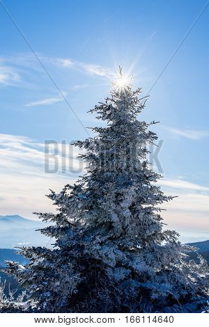 Snow covered evergreen trees at the top of Round Bald in the Roan Highlands during a sunny day as we hiked along the Appalachian Trail on the Tennessee and North Carolina border