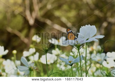 Butterfly and white flower in the garden. It's beautiful and very impressive.