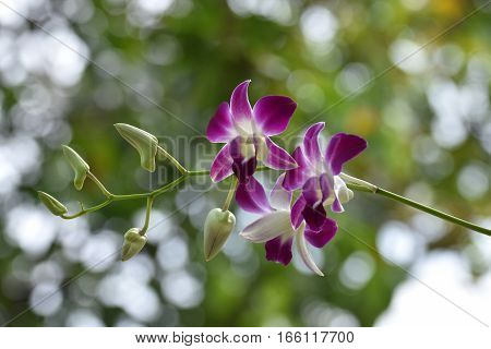 Orchids fragrant and charming. It's very impressive.