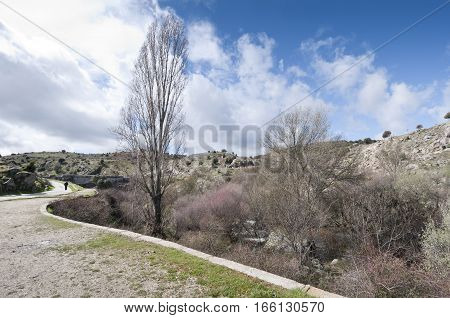 Riparian forest along the river Manzanares, Colmenar Viejo, Madrid, Spain. This river has had a great historical importance due to its close relation to the city of Madrid