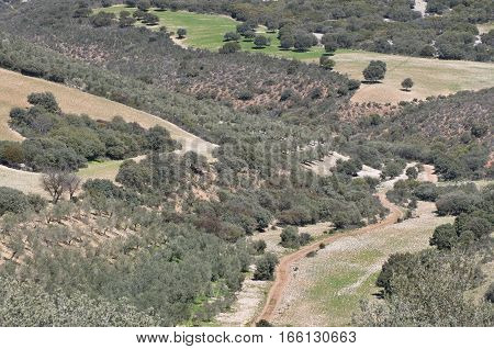 Olive groves in a mosaic landscape. Photo taken in Ciudad Real Province Spain