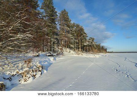 Vselug lake in winter. Penovskiy district Tver oblast Russia.