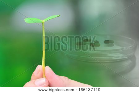 green herb plant in hand with medical health with drug capsule background