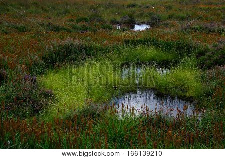 Water holes surrounded by flowers and plants