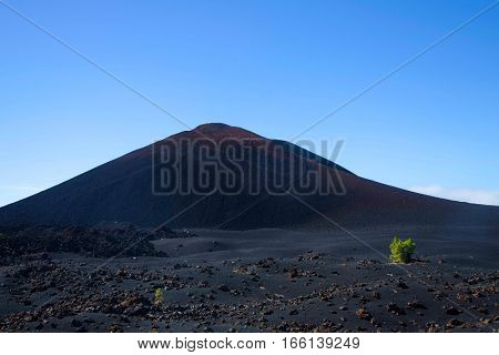 Bare volcano with small plant in front of it, Tenerife Spain
