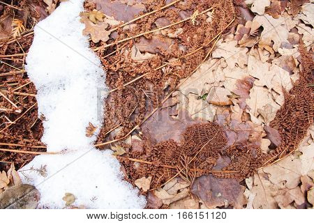 Dry leaves under the snow. Withered and dried plants in late autumn.