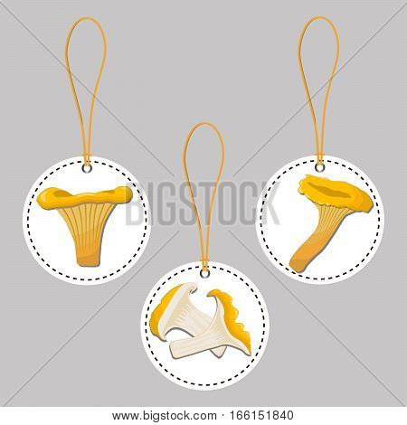 Abstract vector illustration of logo for whole ripe yellow mushroom chanterelle,cut sliced,product on background.Mushroom drawing consisting of tag label,ripe food.Eating fresh chanterelles mushrooms.