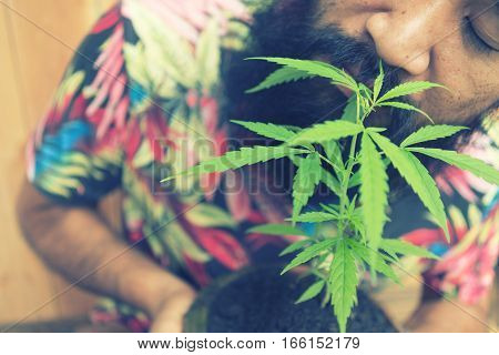Happy Man With Cannabis Plant