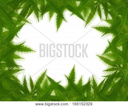 Bright Green Cannabis Sativa Leaf Frame