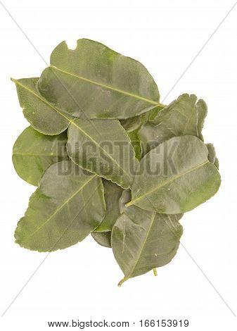 Kaffir Lime Leaves Pile