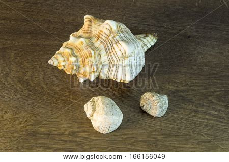 Sea snail shell. With a beautiful pattern on the shell.