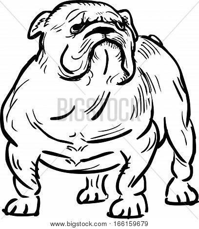 Funny english bulldog , vector outline illustration
