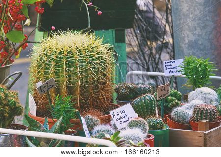 Cactus plants on display at a flower shop in Borough Market London (vintage style)