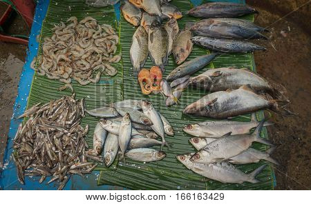 Selling saltwater fishes on top of banana leaf photo taken in Jakarta Indonesia java