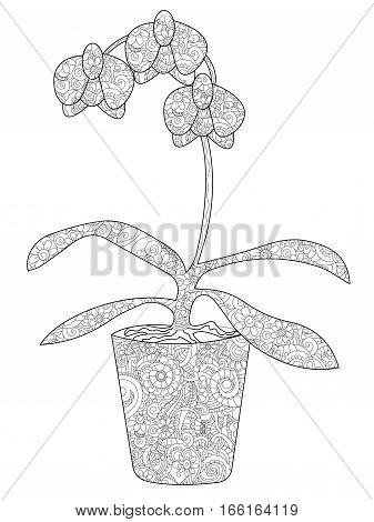 Flower orchid in a pot coloring book for adults vector illustration. Anti-stress coloring for adult. Zentangle style. Black and white lines. Lace pattern feline